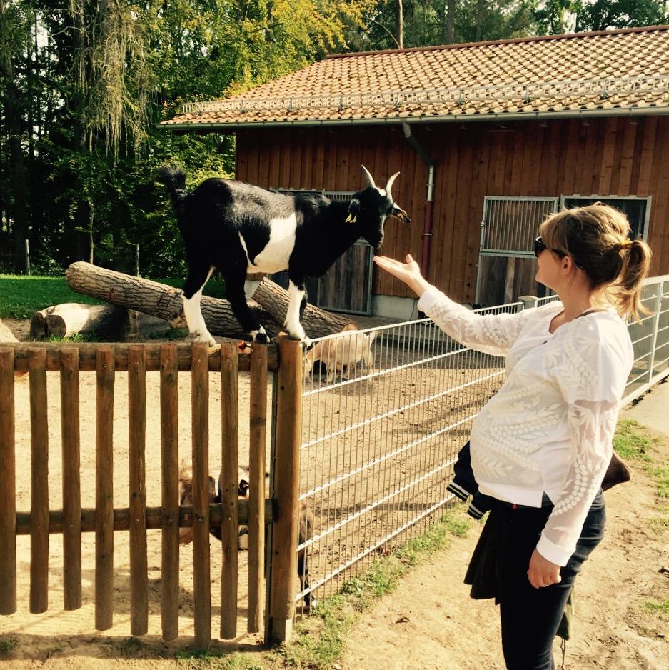 geborgengebären_letzter Tierparkbesuch vor dem großen Termin_MJK